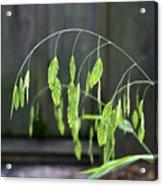 Arching Grass Acrylic Print