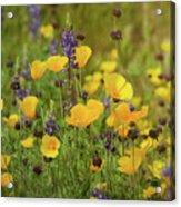 Arizona Wildflowers  Acrylic Print