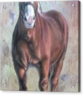 Arthur The Belgian Horse Acrylic Print