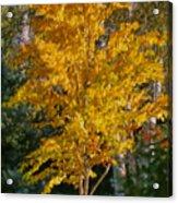 Artistic Fall Colours Acrylic Print