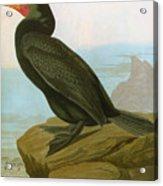 Audubon: Cormorant Acrylic Print