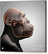 Australopithecus With Skull Acrylic Print
