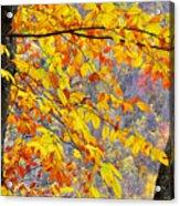 Autumn Beech Leaves Acrylic Print