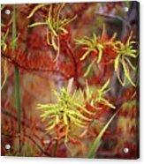 Autumn Colors 24 Acrylic Print