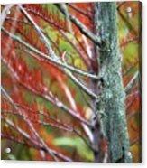 Autumn Colors 25 Acrylic Print