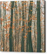 Autumn Forest Acrylic Print