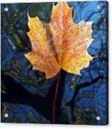 Autumn Leaf On The Water Acrylic Print
