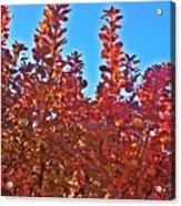 Autumn Reds  Acrylic Print