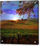Autumn Vineyard Acrylic Print