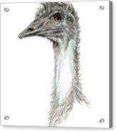 Bad Leroy Brown The Emu Acrylic Print