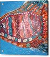 Barracuda Lite Acrylic Print