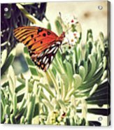 Beach Butterfly Acrylic Print