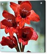 Beatiful Red  Acrylic Print