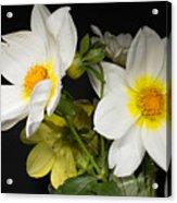 Beautiful Autumn White Flowers Acrylic Print