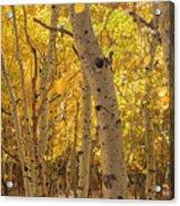 Beautiful Fall Color In California Acrylic Print