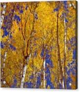 Beautiful Fall Season Nature Renews Itself  Theme Green Trees Reaching For The Sky  Save The Environ Acrylic Print