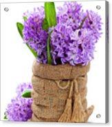 Beautiful Hyacinths Acrylic Print