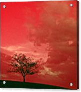Beauty Stands Against The Terrible Sky Acrylic Print