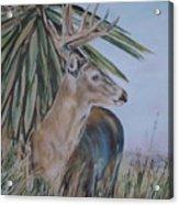 Berry Buck Acrylic Print