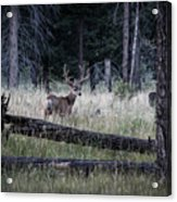 Big Buck Acrylic Print