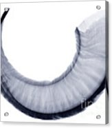 Bighorn Sheep Horn, X-ray Acrylic Print
