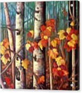 Birch And Maple Acrylic Print