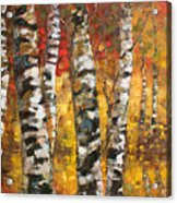 Birch Trees In Golden Fall Acrylic Print