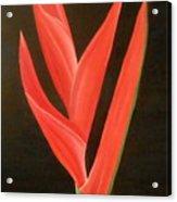 Bird Of Paradise Collection Acrylic Print