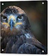 Bird Of Prey Acrylic Print