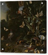 Birds Butterflies And A Frog Among Plants And Fungi Acrylic Print