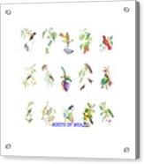 Birds Of Brazil Acrylic Print