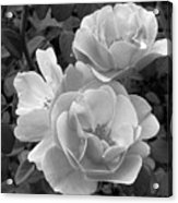 Black And White Roses 2 Acrylic Print