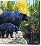 Black Bear And Cub Acrylic Print