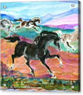 Black Pony Acrylic Print