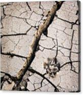 Blair Cracked Mud 1685 Acrylic Print