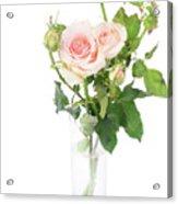 Rose Twigs Acrylic Print