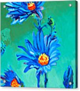 Blue Daisies Acrylic Print