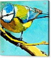Blue On His Stick Acrylic Print
