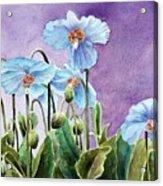Blue Poppies Acrylic Print by Bobbi Price