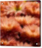 Blurred Seasonal Flowers With Yellow Background Acrylic Print