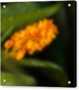 Blurred Seasonal Orchid Flowers With Dark Green Background Acrylic Print
