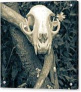 Bobcat Deer Antler Acrylic Print