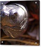 Bog Turtle Acrylic Print