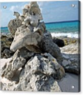 Bonaire Coral And Shells 3 Acrylic Print