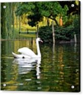Boston Public Garden Swan Green Reflection Acrylic Print