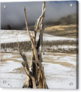 Bristlecone Fog And Sierra Nevada 1 Acrylic Print