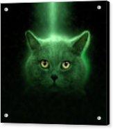 British Shorthair Cat Acrylic Print
