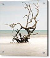Bulls Island C-vi Acrylic Print