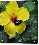 Butterflies Are Blooming 25 Acrylic Print