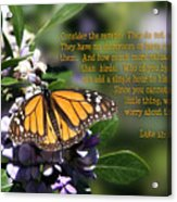 Butterfly With Scripture Acrylic Print by Linda Phelps